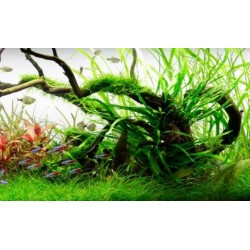 Planted Aquarium Mounting Products
