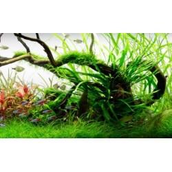 Planted Aquarium Mounting Products
