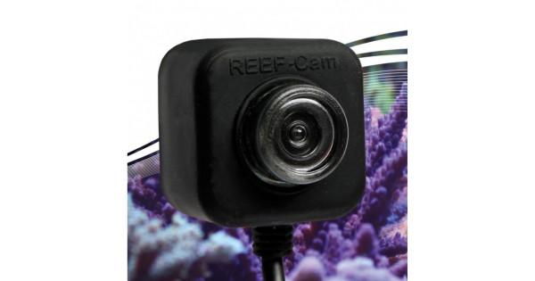 Icecap Reef Cam